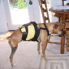Three Legged Dogs, amputee dogs, Tripods, and Tripawds love the support suit for its solid lift.
