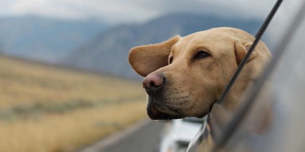 K9 / Pet / Dog Transportation Services  Photo by Emerson Peters on Unsplash