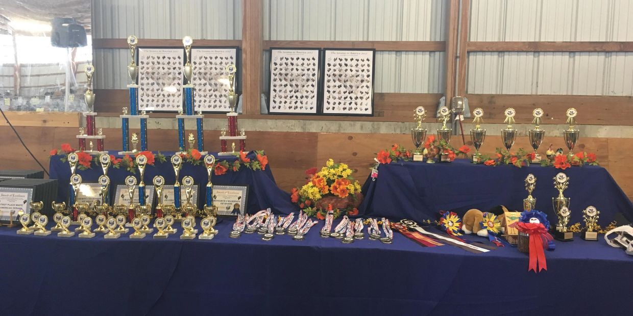 Trophy Table Fall 2018 show
