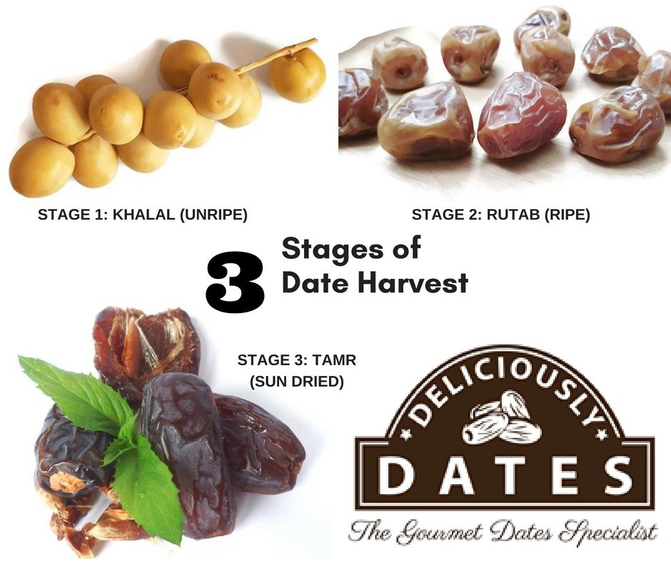 difference between dates and dating