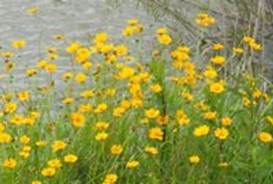 Wildflowers by catch and release pond