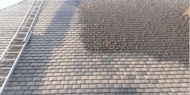 roof moss removal Chester roof moss removal Liverpool roof moss removal Manchester roof moss removal