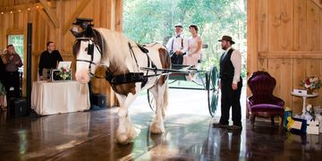 Horse and Carriage Wedding Bridle Oaks Deland Fl