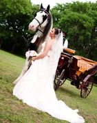 Horse and Carriage Wedding Gainesville FLorida