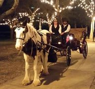 Horse and Carriage Port Orange Fl