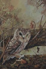 oil painting saw whet owl by Lisa Petry-Burt