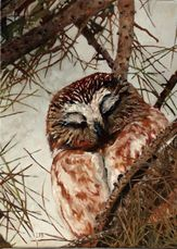 oil painting on canvas saw whet owl by Lisa Petry-Burt