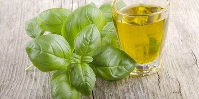 basil oil, tulsi oil, basil oil suppliers, basil oil manufacturers