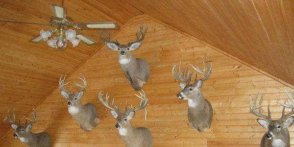 Whitetail River Lodge, hunting