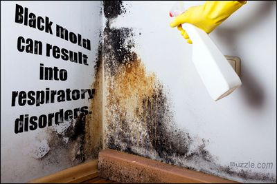 Mold is a Killer!