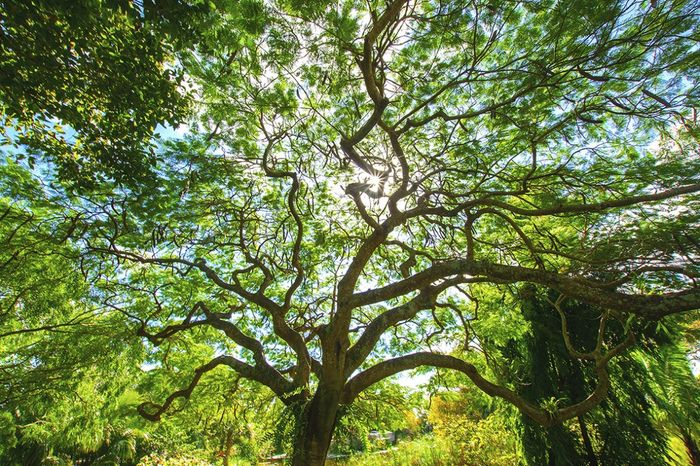 Tree of Life, shot by Dr. Carri Lager at Mounts Botanical Garden  Honorable Mention Landscapes 2019