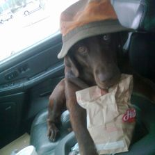 Sweet the dog. The Mark Tuttle Tree Service mascot eating her  breakfast biscuit