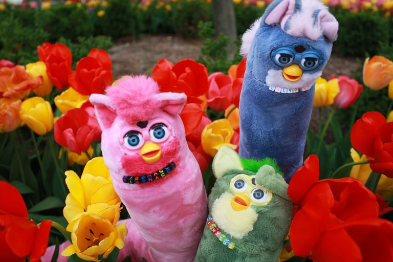 Our girl group of Furbs enjoying the tulips.
