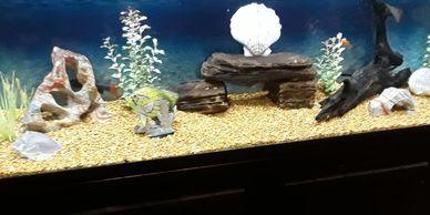 The Aquarist Company LLC - Home | The Aquarist Company LLC