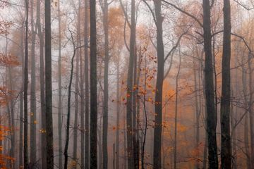 """Enchanted Forest"" - limited edition fine art photograph"