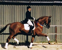 WELCOME TO Nicky Barrett Dressage
