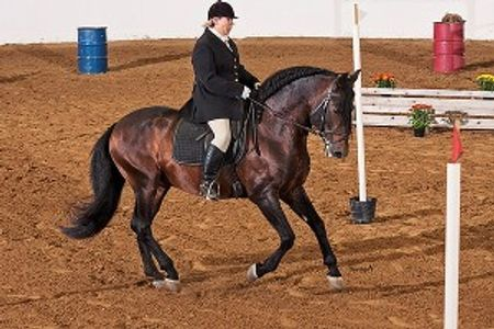 Andalusians in Texas, Andalusian dressage. Horses. Horse boarding in Texas. Dressage lessons.