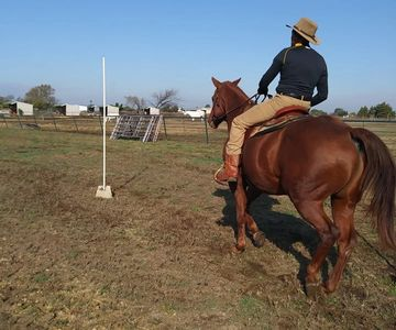 Horses. Horse Boarding in Texas. Riding lessons in Dallas Texas. Trail riding in Texas. Horse Riding