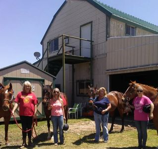 Horses. Horse riding lessons in Texas. Dressage in Dallas. Boarding horse in Duncanville Texas. Fun