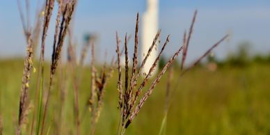 Native warm season grasses prairie seed mix Missouri native seed from the heartland habitat cover