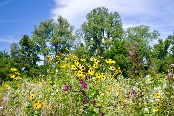 Heartland native prairie seed mix plant your legacy pollinators wildlife habitat monarch bees birds