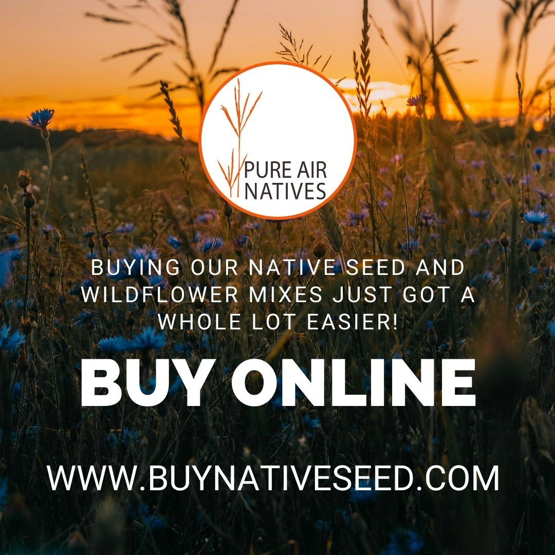 https://www.buynativeseed.com buy native seed pollinators wildlife switchgrass bedding cover habitat
