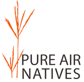 Pure Air Natives