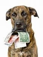 Dog holding money in his mouth
