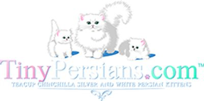 Silver Doll Face Persian Smaller Cats-Kittens - Tiny Small