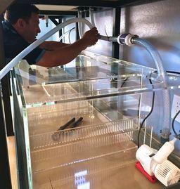aquarium maintenance Scottsdale paradise valley, aquarium installation, aquarium cleaning