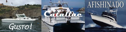 Private boat charters, island tours