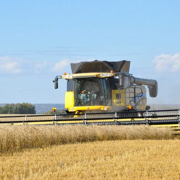 CX 8080 New Holland Combine combining oat field in northern Alberta
