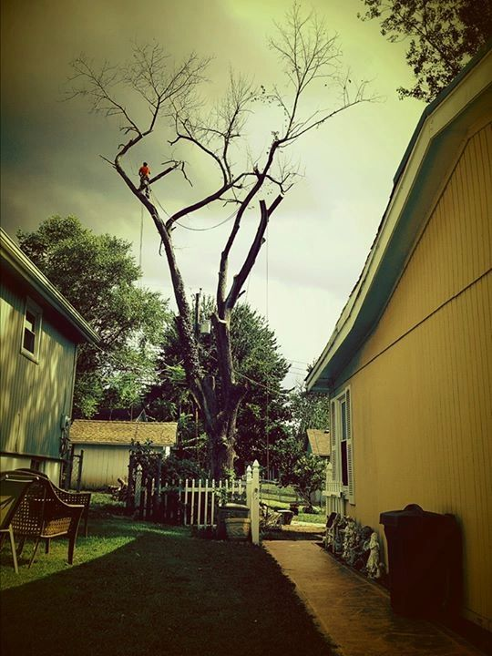 Large dead trees can be hazardous to property- Removal involving amazing neighborhood collaboration