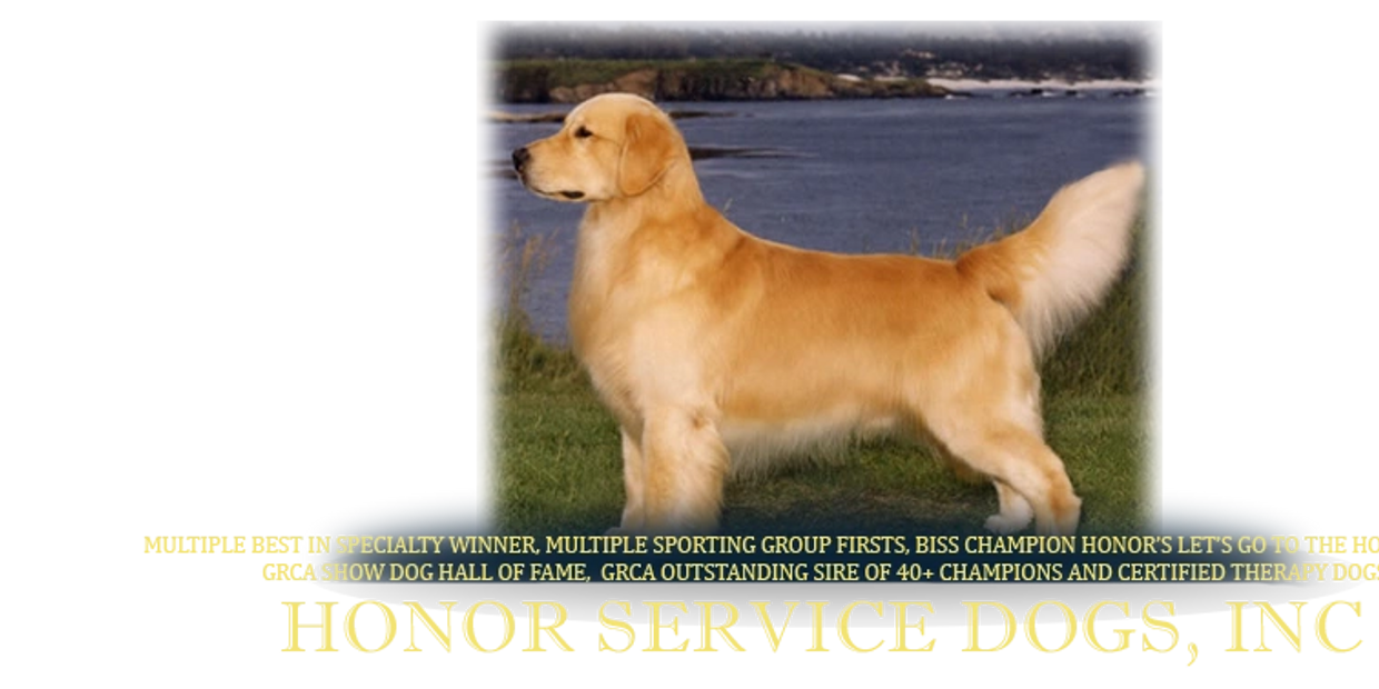 Honor english goldens therapy dogs service dogs Charlotte NC