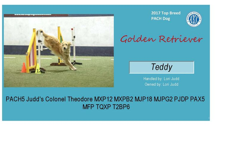 Congrats to Lori and Teddy for AKC 2017 Top PACH Golden Retriever.