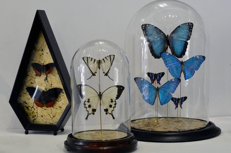 Mixed Media Butterfly Art Jackie Adams