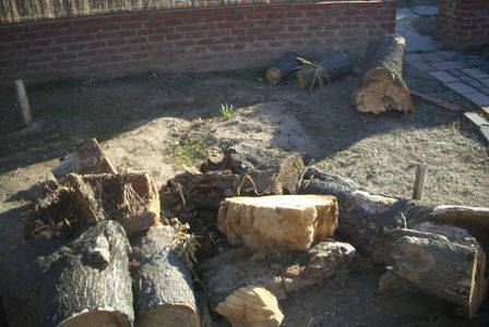 Picture of cut tree during tree removal