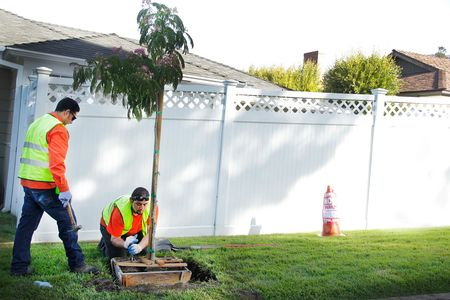 Two Flintridge Tree Care workers planting tree as part of public works project