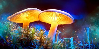 Activists hope to make Denver the first U.S. city to decriminalize psychedelic mushrooms