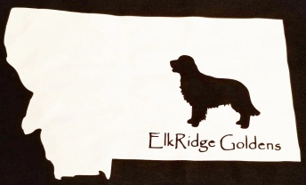 ElkRidge Goldens-English Golden Retrievers