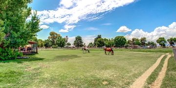 Horse property, real estate, chandler, acreage, horse acreage
