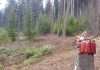 Nuzzo Forest Care in action, Alberton, Montana