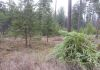 Tree thinning and piling for forest health and forest fuel reduction
