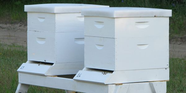 Indiana honey  bees for sale  Bee Hives for sale Resources and supplies