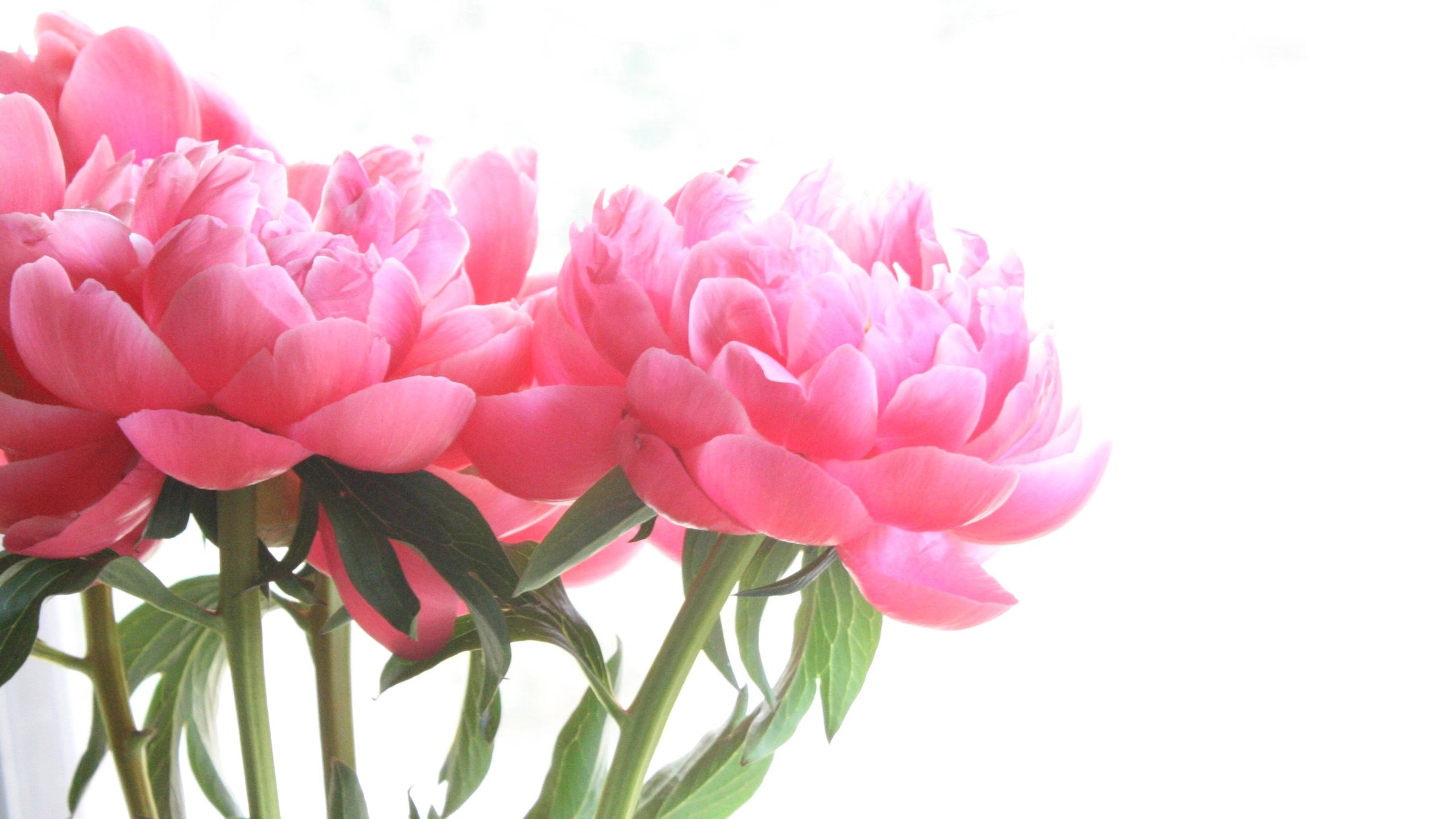 bright pink peonies wedding centerpieces bridal bouquets florist near me