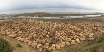Anchorage Aero | Peninsula Walrus Viewing