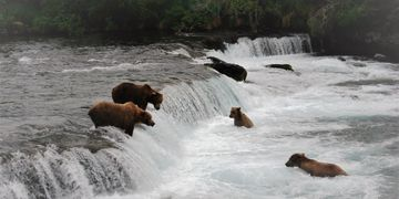 Anchorage Aero | Brooks Falls Bear Viewing