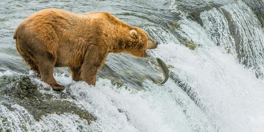 Anchorage Aero | Brooks Falls Bear Viewing Tour
