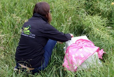 Hare rescue and release