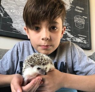 A Morning Star Hedgehog with his owner.  Best buddies